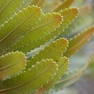Banksia Leaves by lorelle