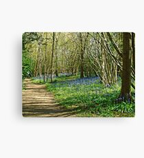Bluebell Walk Canvas Print