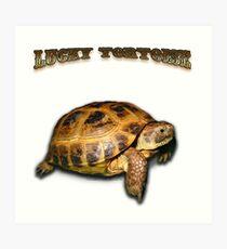Lucky Tortoise Art Print