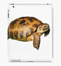Greek Tortoise iPad Case/Skin