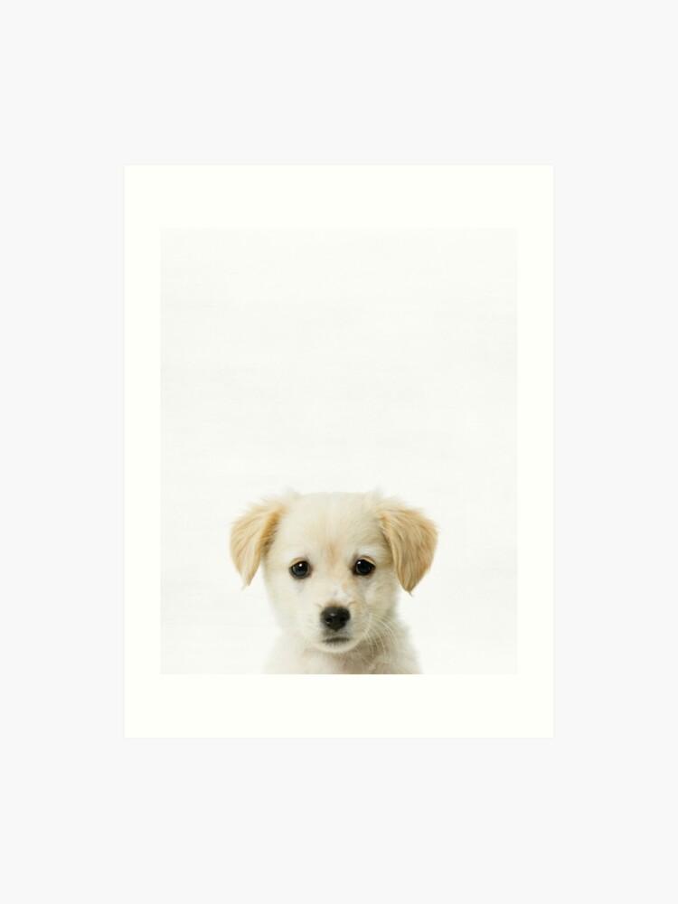 Modern Art Based On Pet Photo