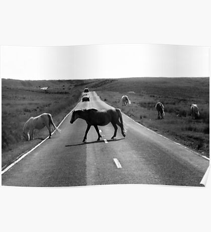 Horse crossing a road in Swansea`s Gower, protected area in Wales Poster