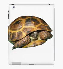 Greek Tortoises in Shell iPad Case/Skin