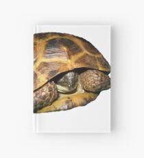 Greek Tortoises in Shell Hardcover Journal