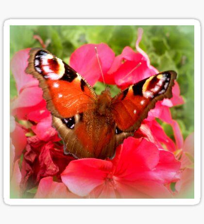 Peacock butterfly on geranium Sticker