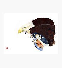 Raptors Photographic Print