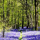 Bluebell Path by mikebov