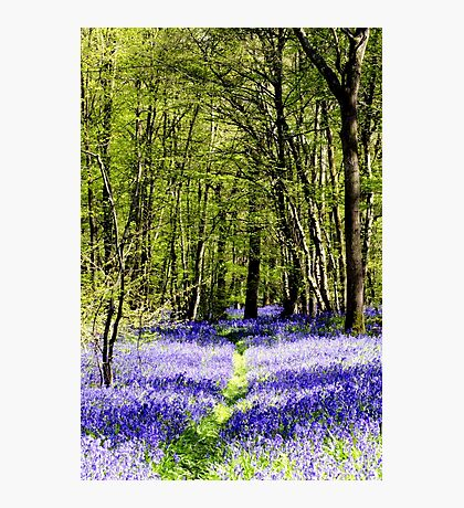 Bluebell Path Photographic Print