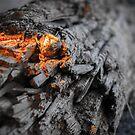 Fire Light on Drift Wood by Lee Harvey