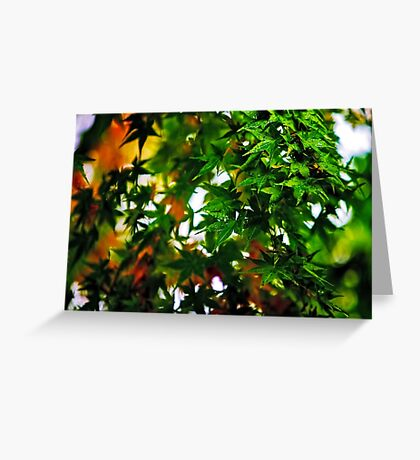 Maple in the Mist Greeting Card