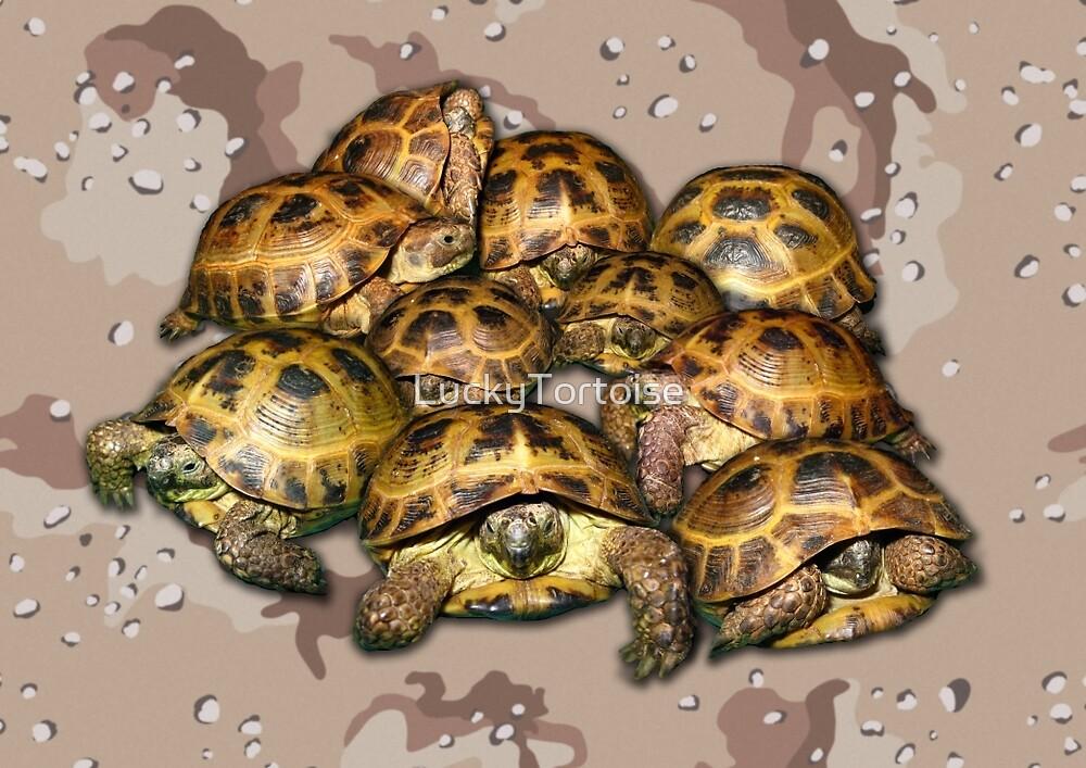 Greek Tortoise Group - Desert Camo Background by LuckyTortoise