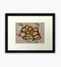 Greek Tortoise Group - Desert Camo Background Framed Print