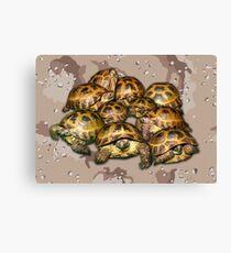 Greek Tortoise Group - Desert Camo Background Canvas Print