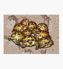 Greek Tortoise Group - Desert Camo Background Photographic Print