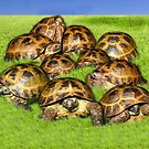Greek Tortoise Group on Grass Background by LuckyTortoise