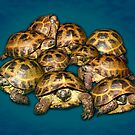 Greek Tortoise Group on Gray-Blue Background by LuckyTortoise