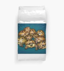 Greek Tortoise Group on Gray-Blue Background Duvet Cover