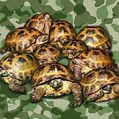 Greek Tortoise Group on Green Camo by LuckyTortoise