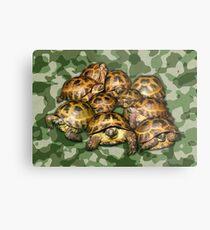 Greek Tortoise Group on Green Camo Metal Print