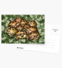 Greek Tortoise Group on Green Camo Postcards