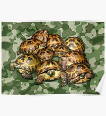 Greek Tortoise Group on Green Camo Poster