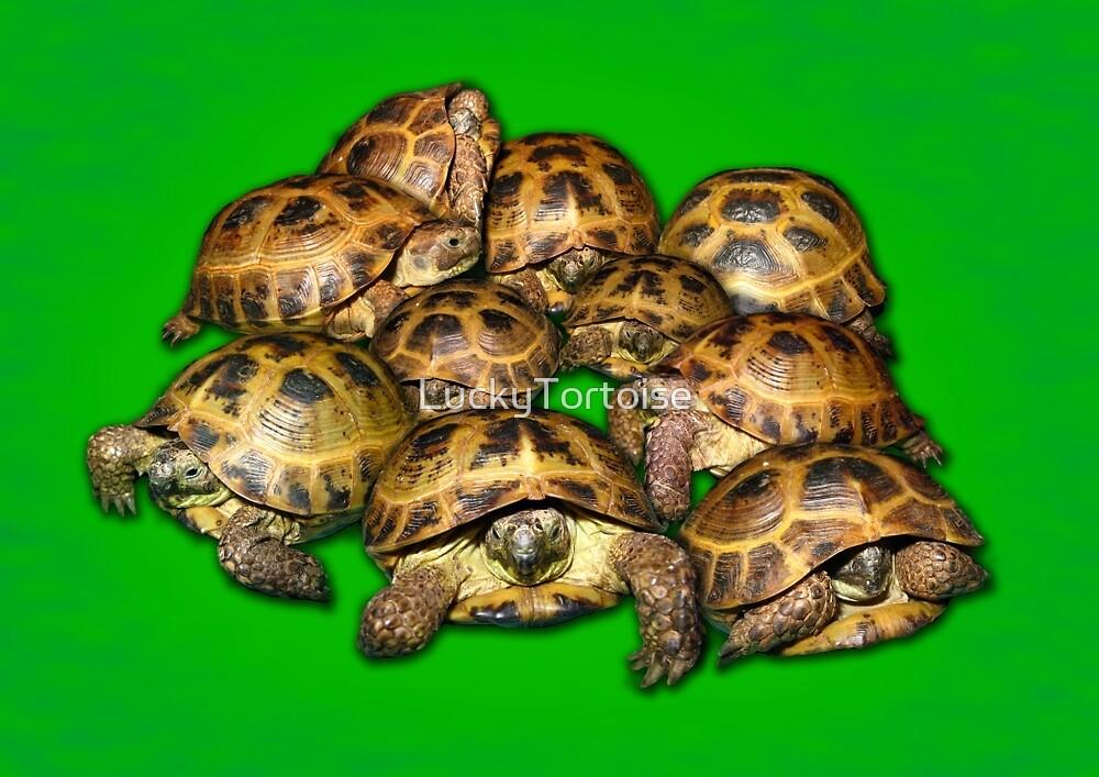 Greek Tortoise Group on Bright Green Background by LuckyTortoise