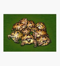 Greek Tortoise Group on Darn Green Background Photographic Print