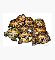 Greek Tortoise Group Photographic Print