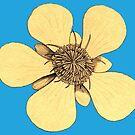 Flower Power by Kawka