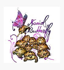 Tortoise Butterflies - Social Butterfly Photographic Print