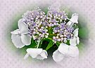 White Lace Cap Hydrangea Blossoms by MotherNature