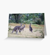 Kangaroo Trio Greeting Card
