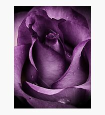 Purple Rose Photographic Print