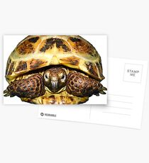 Tortoise Postcards