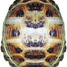 Tortoise Shell - Carapace by LuckyTortoise