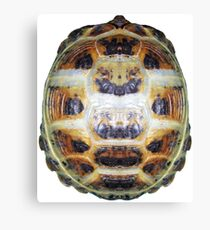 Tortoise Shell - Carapace Canvas Print