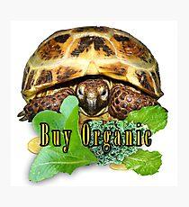 Tortoise - Buy Organic Photographic Print