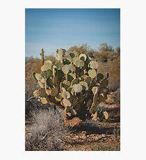 Cactus (Opuntia) Photographic Print