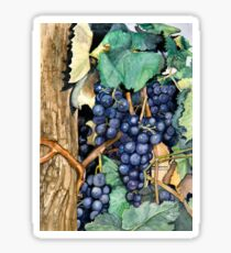 Grapes Ready To Harvest Sticker