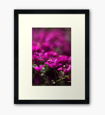 Hot and Windy Framed Print