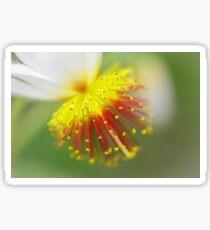 Sparrmannia Africana Sticker