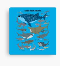 Know Your Sharks Canvas Print