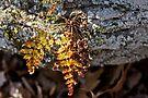 The Golden Fern by MotherNature