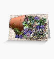 Succulents for sale Greeting Card