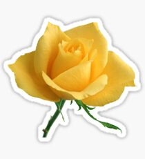 Beautiful yellow rose Sticker