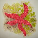 RED STARFISH by dkatiepowellart