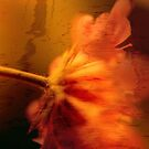 Abstract Stem and Flower by bouldercreek