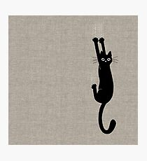 Black Cat Holding On Photographic Print