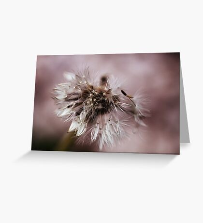 Dandelion In Monochrone Greeting Card