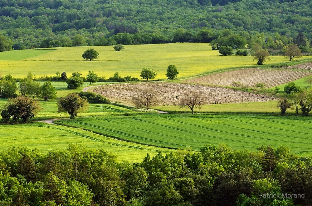 Springtime in the countryside by Patrick Morand